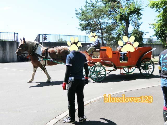 無料!馬車にも乗れる旭川乗馬倶楽部のホースショー_ブログ子育てママの日々役に立ちそうなちょっとしたこと_blueclover123