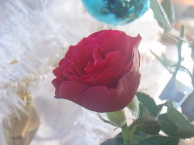 f:id:bluemoonbell:20061224085914j:image