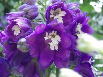 f:id:bluemoonbell:20070511110644j:image:left