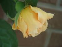 f:id:bluemoonbell:20070516115945j:image