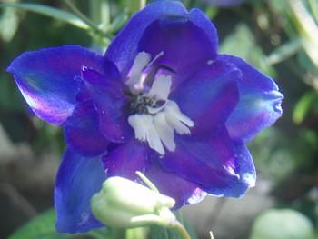 f:id:bluemoonbell:20070527064651j:image:left