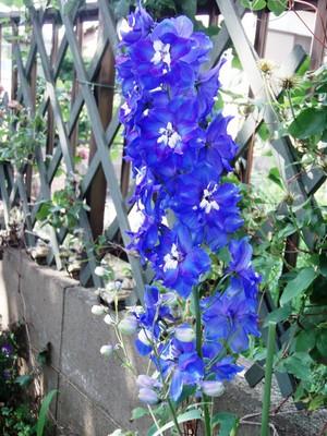 f:id:bluemoonbell:20070602145816j:image