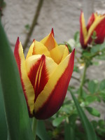 f:id:bluemoonbell:20080415125136j:image:left