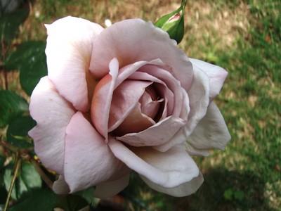 f:id:bluemoonbell:20080610113850j:image