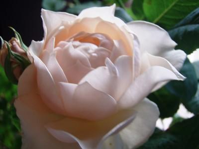 f:id:bluemoonbell:20080621151047j:image