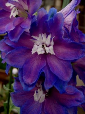f:id:bluemoonbell:20081030064217j:image