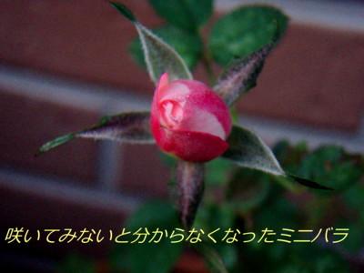f:id:bluemoonbell:20081106060608j:image