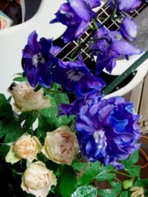 f:id:bluemoonbell:20081107064939j:image