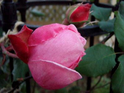 f:id:bluemoonbell:20081219070855j:image