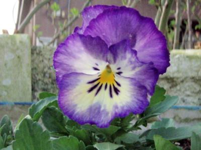 f:id:bluemoonbell:20090319063757j:image