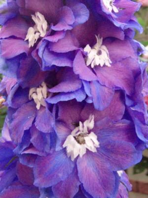 f:id:bluemoonbell:20090518060757j:image