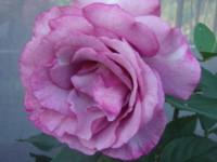 f:id:bluemoonbell:20091016123928j:image