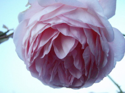 f:id:bluemoonbell:20091022060250j:image