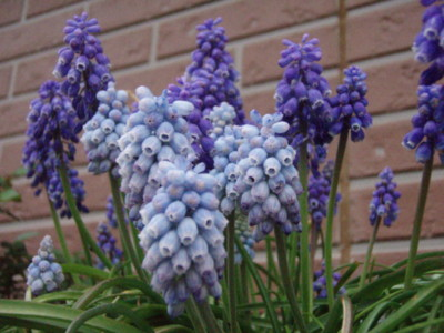 f:id:bluemoonbell:20100411054513j:image