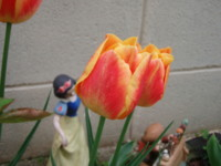 f:id:bluemoonbell:20100420060737j:image
