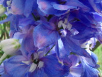 f:id:bluemoonbell:20100507064813j:image:left