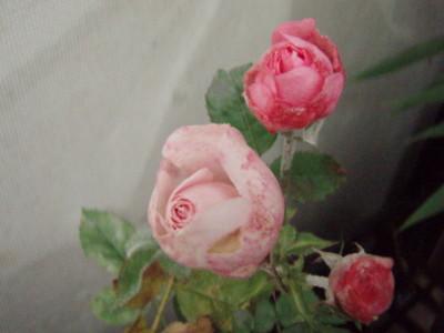 f:id:bluemoonbell:20101112120738j:image