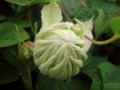 f:id:bluemoonbell:20110517052432j:image:medium:left