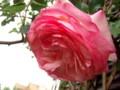 f:id:bluemoonbell:20110523054809j:image:medium:right