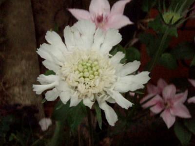f:id:bluemoonbell:20110527071449j:image