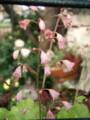 f:id:bluemoonbell:20110601062223j:image:medium:left