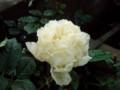 f:id:bluemoonbell:20110606052445j:image:medium:right