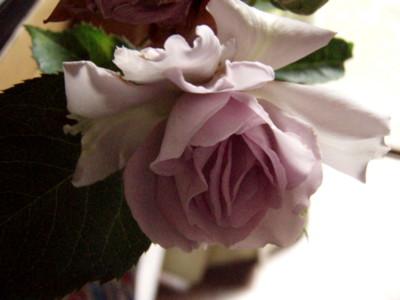 f:id:bluemoonbell:20110615051811j:image