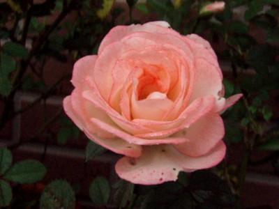 f:id:bluemoonbell:20111011062259j:image