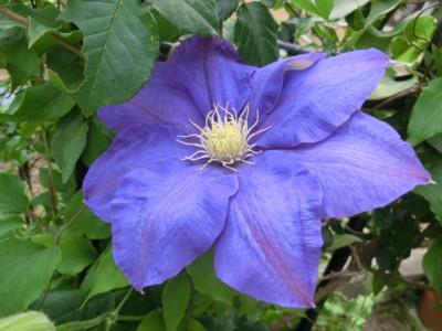 f:id:bluemoonbell:20120508145136j:image