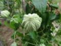 f:id:bluemoonbell:20120508145233j:image:medium:left