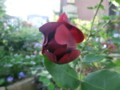 f:id:bluemoonbell:20120513064039j:image:medium:left