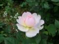 f:id:bluemoonbell:20120516135109j:image:medium:right