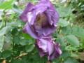 f:id:bluemoonbell:20120516135130j:image:medium