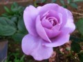 f:id:bluemoonbell:20120519153332j:image:medium:left