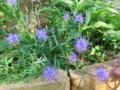 f:id:bluemoonbell:20120530160950j:image:medium:left