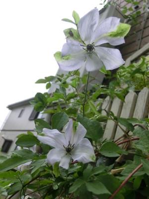 f:id:bluemoonbell:20120605070512j:image:left