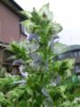 f:id:bluemoonbell:20120622094219j:image:medium:left