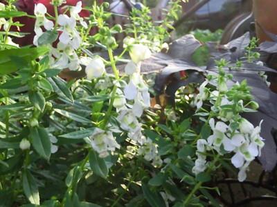 f:id:bluemoonbell:20121007161252j:image