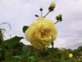 f:id:bluemoonbell:20121025110805j:image:medium:right
