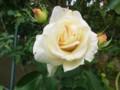 f:id:bluemoonbell:20121025110825j:image:medium:left