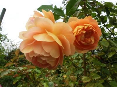 f:id:bluemoonbell:20121025111129j:image