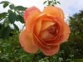 f:id:bluemoonbell:20121025111221j:image:medium:right