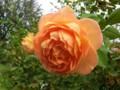 f:id:bluemoonbell:20121025111235j:image:medium:right