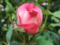 f:id:bluemoonbell:20121025113250j:image:medium:right