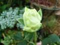 f:id:bluemoonbell:20121031131252j:image:medium:right