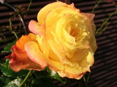 f:id:bluemoonbell:20121107081057j:image