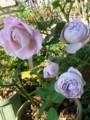 f:id:bluemoonbell:20121107132427j:image:medium:left