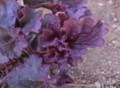 f:id:bluemoonbell:20130328144132j:image:medium:left