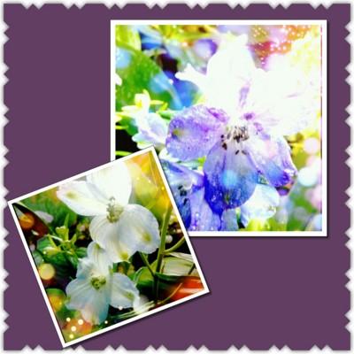 f:id:bluemoonbell:20130425164108j:image