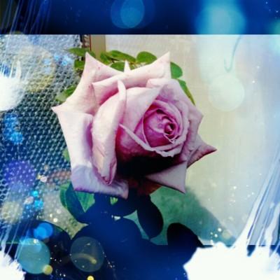 f:id:bluemoonbell:20130520213234j:image